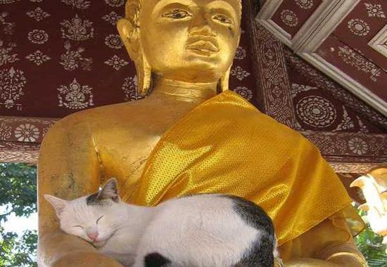 gato-en-estatua-buda