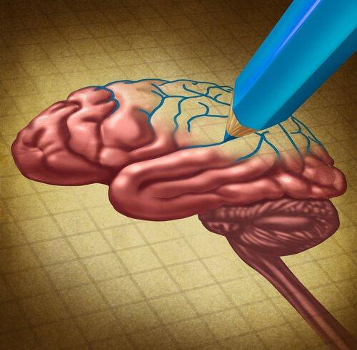 Lápiz-dibujando-un-cerebro